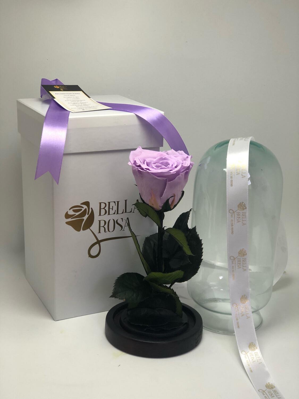 Cúpula de cristal de de 22 cm de alto. Rosa natural preservada Xl.