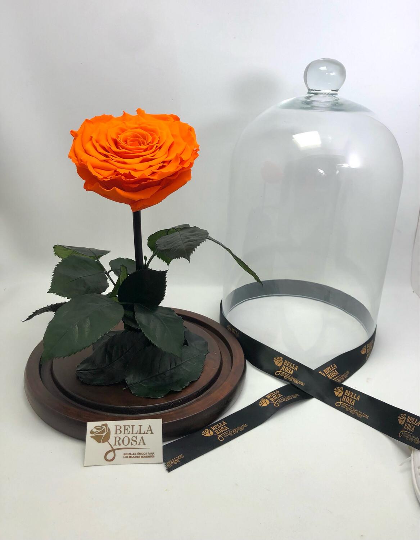 Cúpula de cristal de 33cm de alto, Rosa XXl