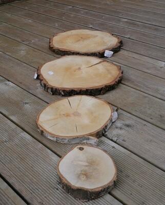 Birch Wood Slice
