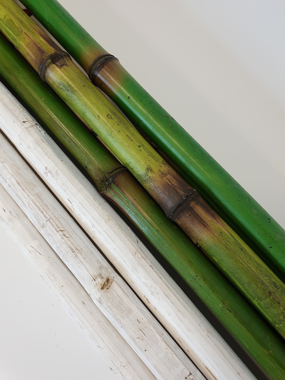 Bamboo coloured stems
