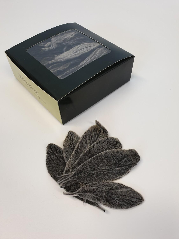 Preserved Stachys Leaves Black