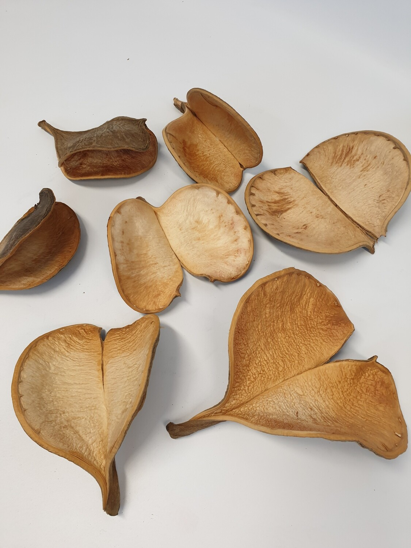 Bolsa Large Seed