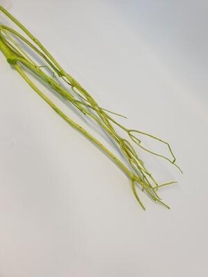 Mitsumata Apple Green