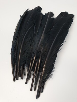 Black Goose Feathers
