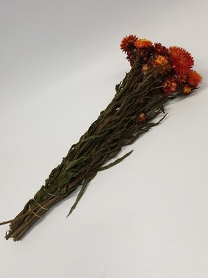 Dried Helechrysum Orange