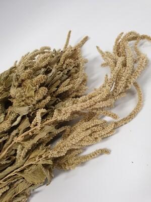 Dried Amaranthus White