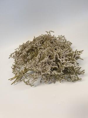 Dried Limonium White