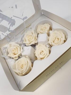 Preserved White Rose Heads