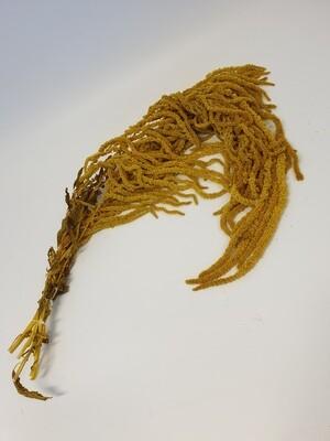 Dried Hanging Amaranthus Yellow
