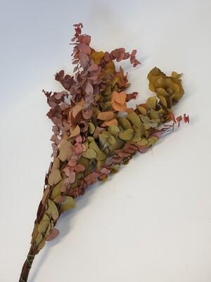 Preserved Autumn Eucalyptus