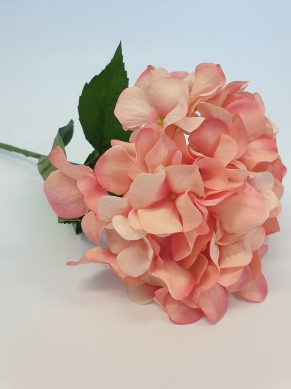 Hydrangea Peach