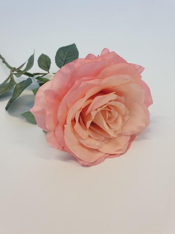 Rose Peach Large