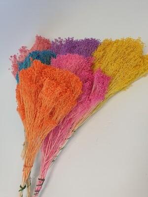 Dried Broom Bloom