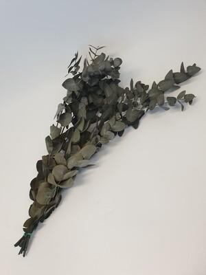 Dried Eucalyptus Cinnerea