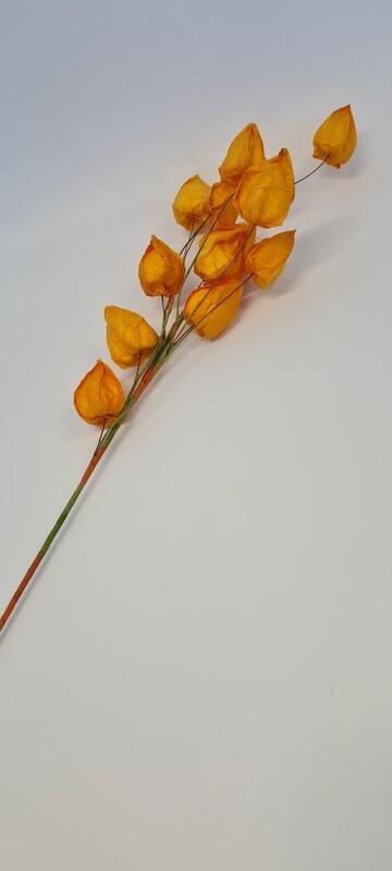 Pick Physallis Yellow