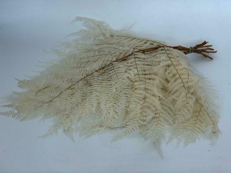 Dried Leather Leaf