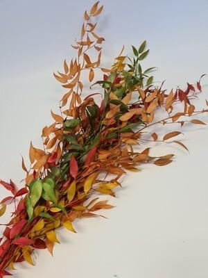 Preserved Autumn Ruscus