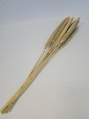 Dried Babala Bleached