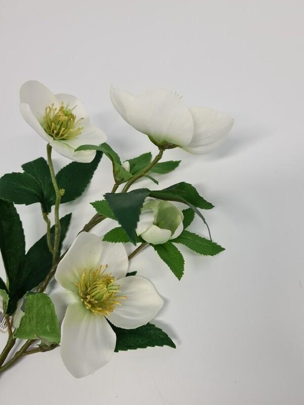 Helebore White