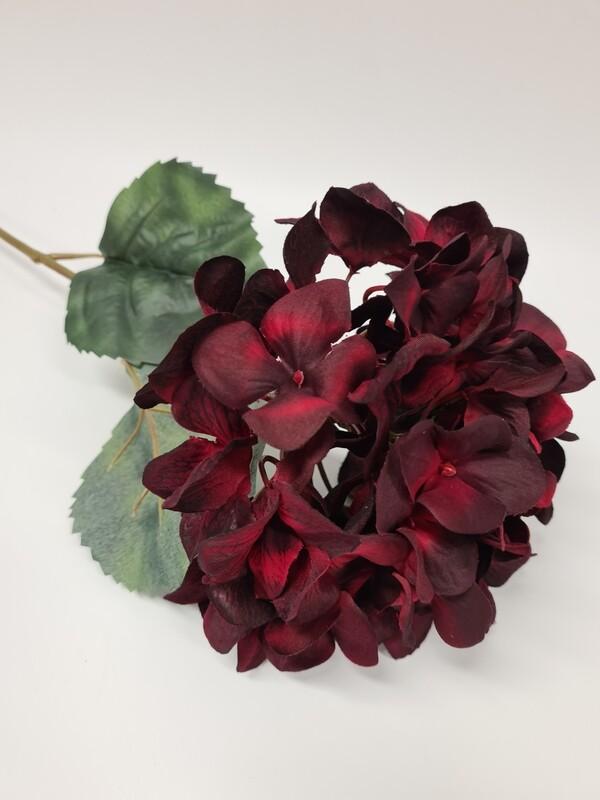 Hydrangea Red