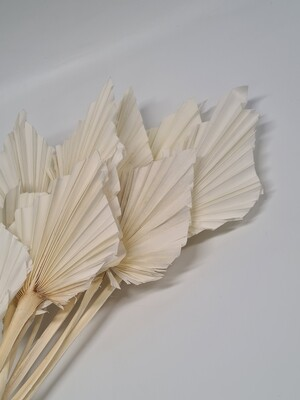 Spear Palm Bleached