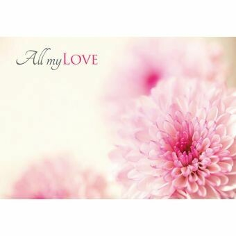 All my Love with Pink Chrysanthemum