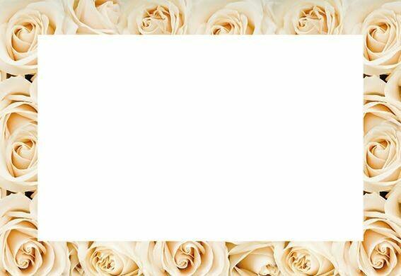 Cream Rose Border