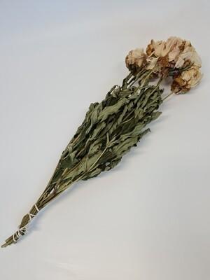 Dried Peony