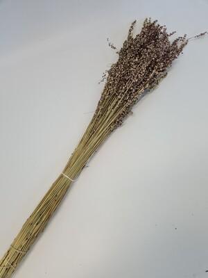 Dried Briza Natural