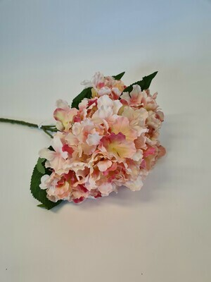 Fantasia Hydrangea Pink