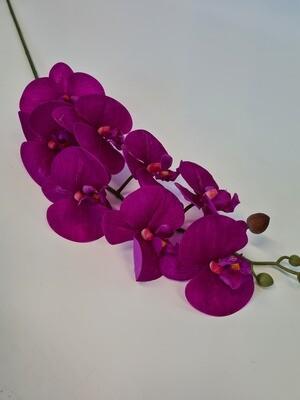 Phalenopsis Orchid Dark Pink