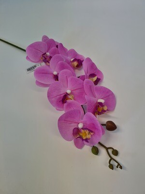 Phalenopsis Orchid Light Pink