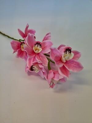 Cymbidium Orchid Pink