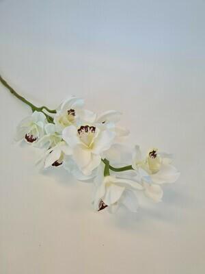 Cymbidium Orchid White