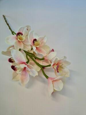 Cymbidium Orchid Blush