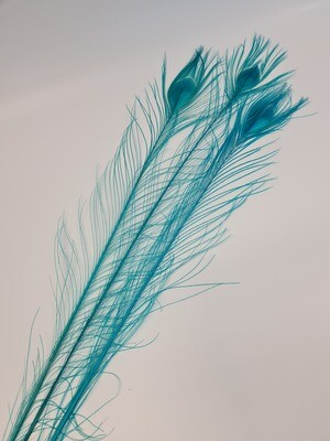 Peacock Feathers Blue