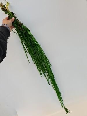 Dried Hanging Amaranthus Green