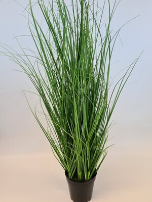 Potted Wild Grass Plant