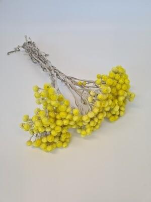 Dried Helechrysum Yellow Mini
