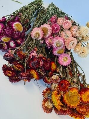 Dried Helechrysum