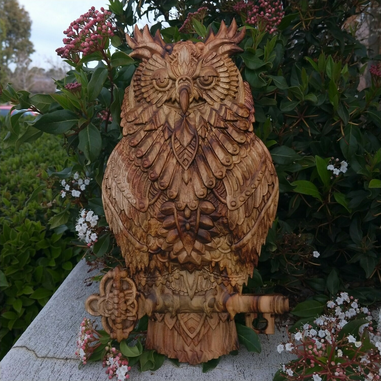 Camphor Laurel Owl perched on a key