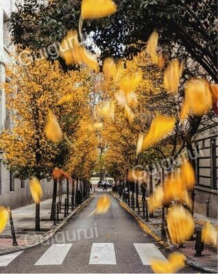 Madrid, Spain - Yellow leaves