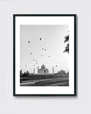 Taj Mahal - Fly