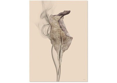 Affiche old scholl leaf