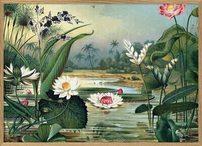 Affiche Water plants horizontal style 18 eme S 30x40 cm