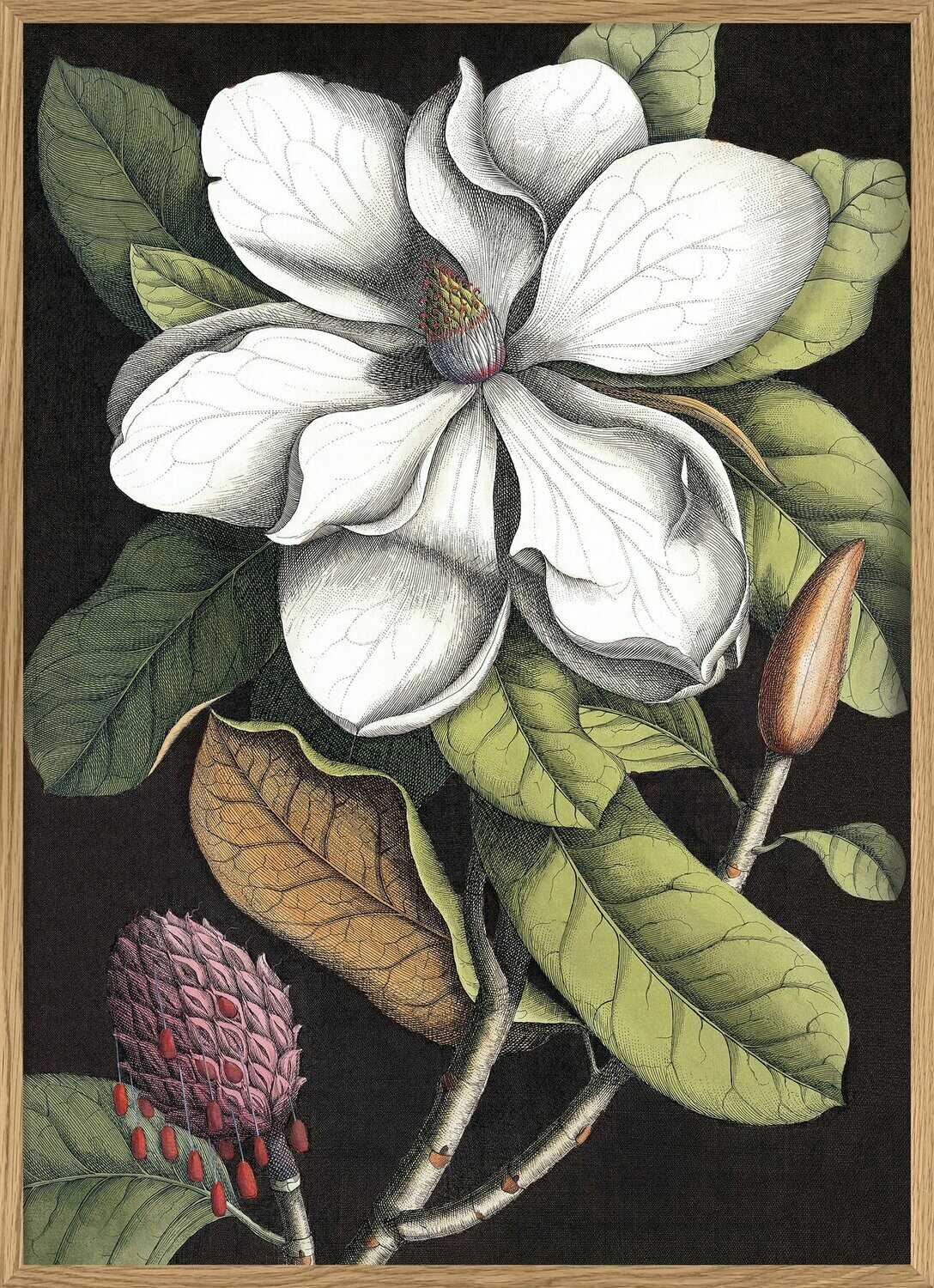 affiche Blooming White Magnolia  30x40 cm