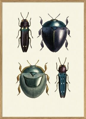 Affiche INSECTUM BIG AND SMALL  30x40 cm
