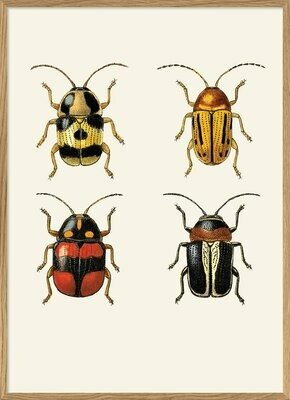 Affiche INSECTUM RED AND GOLD   30x40 cm