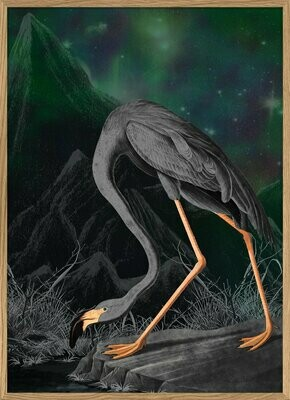 Affiche BLACK FLAMINGO  30x40 cm