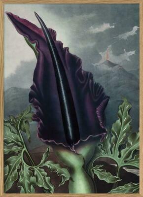 Affiche BLACK VELVET  30x40 cm